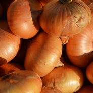 Onion Dutch Yellow - Appx 500 seeds